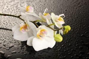 Стол нераздвижной стеклянный с фотопечатью Орхидея белая серия 2-11038 фото | интернет-магазин Складно