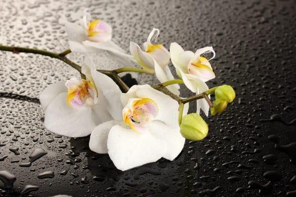 Стол нераздвижной стеклянный с фотопечатью Орхидея белая серия 2 фото | интернет-магазин Складно