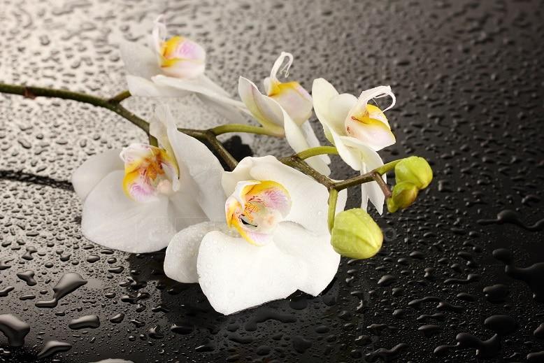 Стол нераздвижной стеклянный с фотопечатью Орхидея белая серия 1 фото 1 | интернет-магазин Складно