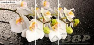 Стол раздвижной стеклянный с фотопечатью Орхидея белая 150х70 см фото превью | интернет-магазин Складно