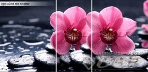 Стол раздвижной стеклянный с фотопечатью Орхидея на камне 150х70 см фото превью | интернет-магазин Складно
