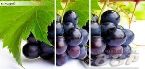 Стол раздвижной стеклянный с фотопечатью Виноград 150х70 см фото превью | интернет-магазин Складно