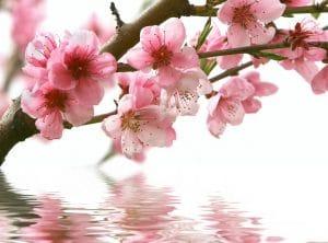 Стол нераздвижной стеклянный с фотопечатью Сакура серия 2 фото превью | интернет-магазин Складно